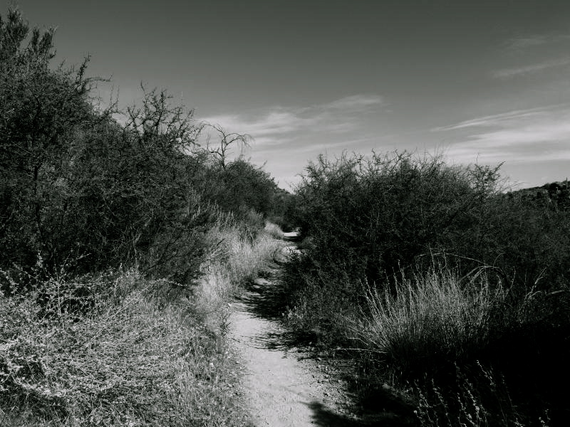 Narrow trail between brush