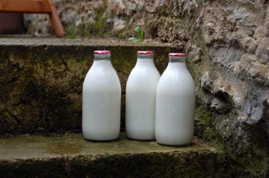 Milk Steps.jpg