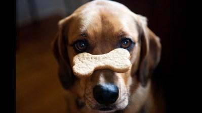 Dog Treat Nose