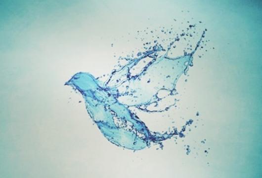 Baptism Bird